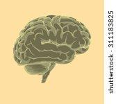 brain   Shutterstock . vector #311183825