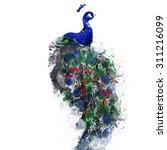 peacock   Shutterstock . vector #311216099