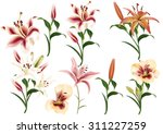 collection of realistic and... | Shutterstock .eps vector #311227259