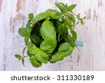 bunch pf fresh green mint and... | Shutterstock . vector #311330189