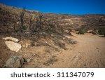 picturesque landscape after ... | Shutterstock . vector #311347079