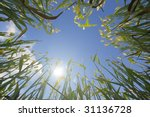 low angle view of a wheat... | Shutterstock . vector #31136728