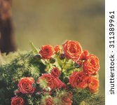 bouquet of tiny roses in sunset ... | Shutterstock . vector #311389961