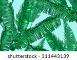 tropical palm leaves seamless... | Shutterstock .eps vector #311443139