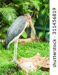 Small photo of Lesser adjutant stork bird in green garden