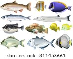 different kind of ocean fish... | Shutterstock .eps vector #311458661