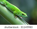 green gecko on the leaf ... | Shutterstock . vector #31145983