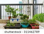 home grown vegetable in the... | Shutterstock . vector #311462789