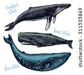 whales set  collection of... | Shutterstock .eps vector #311535869