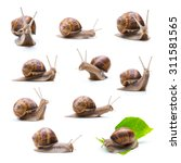 Collage Of Snails On White...