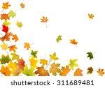 maple autumn falling leaves ... | Shutterstock .eps vector #311689481