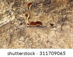 Small photo of serpula lacrymans fungus, the dangerous dry rot growing on an old wall