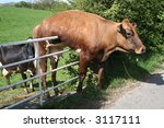 Stock photo dairy cow with problems 3117111