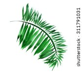 Realistic Palm Leaf Isolated O...