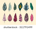 set of ethnic feathers.... | Shutterstock .eps vector #311791499