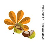chestnuts with leaves and spiny ... | Shutterstock .eps vector #311807561