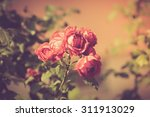 Vintage Photo Of Red Roses...