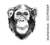 watercolor hand drawn monkey... | Shutterstock . vector #311954069