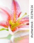 Beautiful Fresh Pink Lily