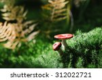 Russula Mushroom With A Red Ha...