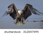 Bald Eagle Landing Over Water