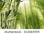 fresh bamboo with bamboo forest ... | Shutterstock . vector #312065555