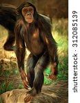Portrait Of A Common Chimpanze...