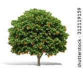 3d Orange Tree Render On White...