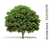 3d Orange Tree Render On White...
