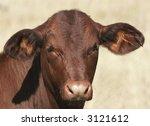 cow | Shutterstock . vector #3121612