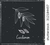 cardamom.   Shutterstock .eps vector #312184457