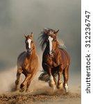 two wild chestnut horses... | Shutterstock . vector #312236747