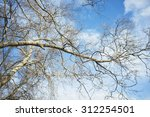Tree And Branches On Blue Sky...