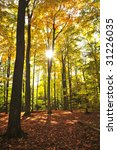 colorful fall forest on a warm... | Shutterstock . vector #31226035