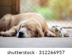 Stock photo close up cat and dog together lying on the floor 312266957