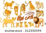 different kind of lion and... | Shutterstock .eps vector #312350594