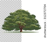 oak tree. isolated vector tree... | Shutterstock .eps vector #312372704