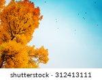 Colorful Foliage In The Autumn...