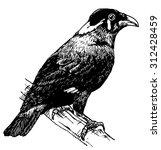 vector illustration. hand drawn ... | Shutterstock .eps vector #312428459
