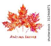 vector autumn colored maple...   Shutterstock .eps vector #312466871