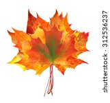 colorful autumn maple leaves... | Shutterstock . vector #312536237