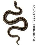 viper snake vector | Shutterstock .eps vector #312577409