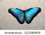Close Up Of A Blue Morpho...