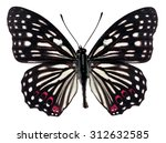 Black Butterfly On Isolated...