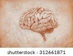 drawn brain | Shutterstock . vector #312661871