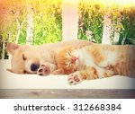 Stock photo kitten and puppy sleeping on the windowsill 312668384