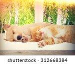 Stock photo kitten and puppy sleeping on the windowsill 312668384