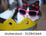 Stock photo funny cat 312841664