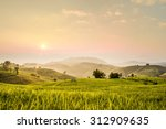 terraced rice field on mountain ... | Shutterstock . vector #312909635
