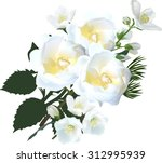 Stock vector illustration with jasmine and rose flowers isolated on white background 312995939